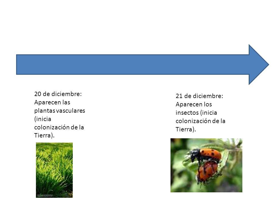 20 de diciembre: Aparecen las plantas vasculares (inicia colonización de la Tierra). 21 de diciembre: