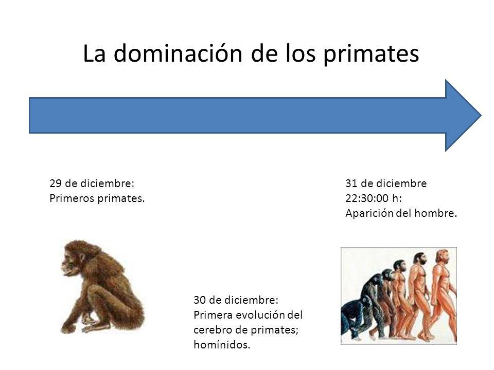 La dominación de los primates