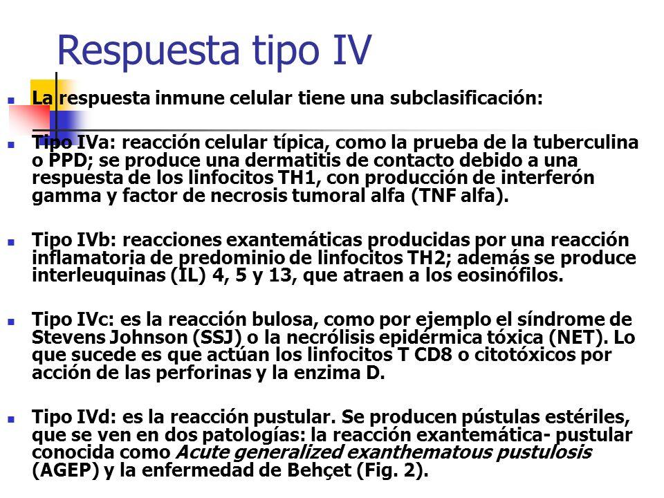 Respuesta tipo IV La respuesta inmune celular tiene una subclasificación: