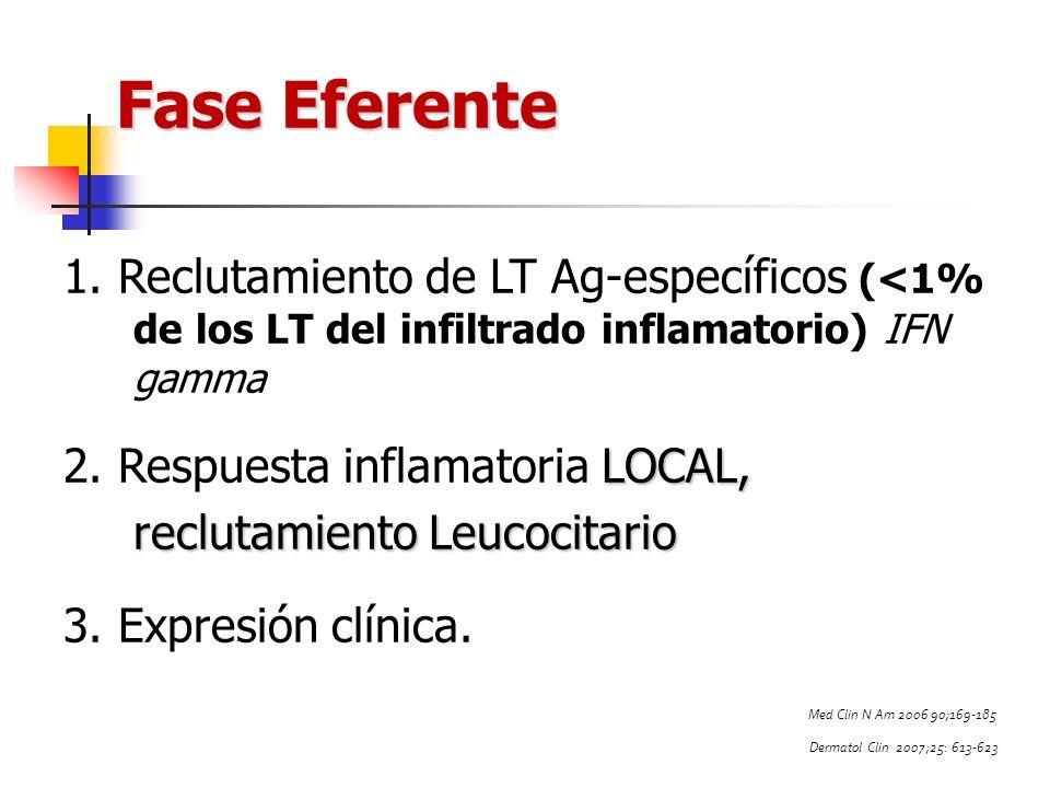 Fase Eferente 1. Reclutamiento de LT Ag-específicos (<1% de los LT del infiltrado inflamatorio) IFN gamma.