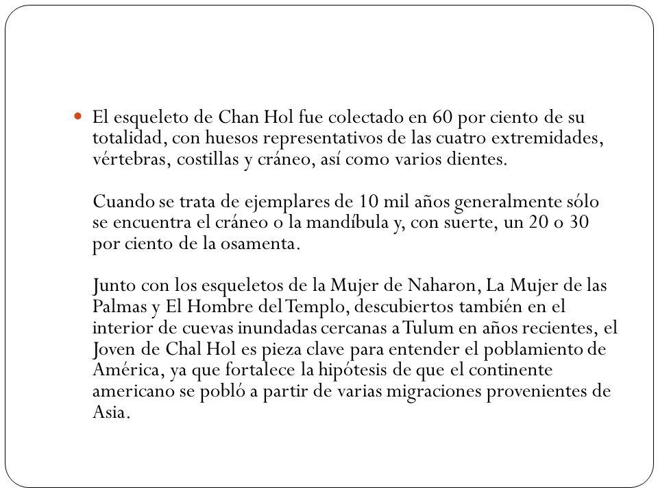 El esqueleto de Chan Hol fue colectado en 60 por ciento de su totalidad, con huesos representativos de las cuatro extremidades, vértebras, costillas y cráneo, así como varios dientes.