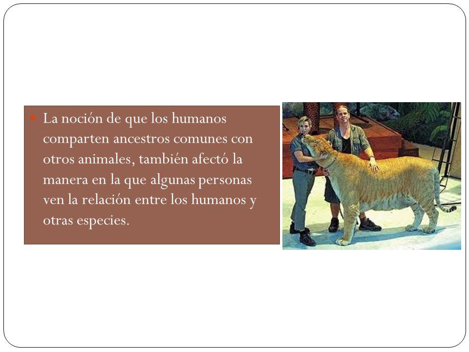 La noción de que los humanos comparten ancestros comunes con otros animales, también afectó la manera en la que algunas personas ven la relación entre los humanos y otras especies.