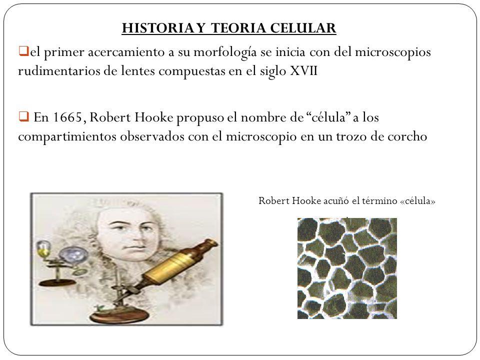 HISTORIA Y TEORIA CELULAR