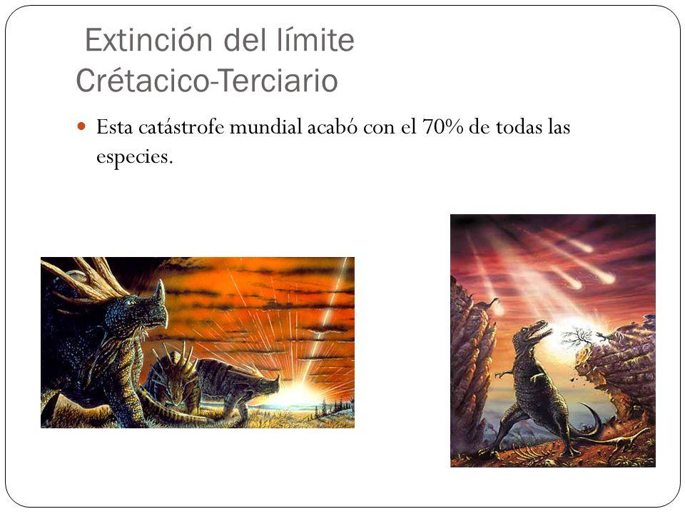 Extinción del límite Crétacico-Terciario
