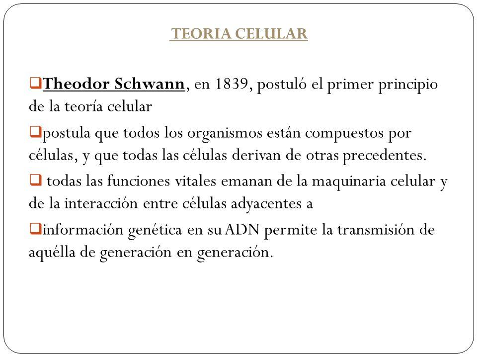 TEORIA CELULAR Theodor Schwann, en 1839, postuló el primer principio de la teoría celular.