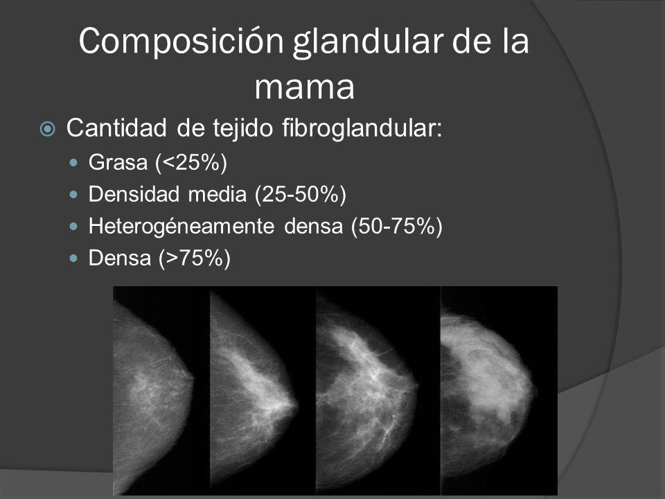 Composición glandular de la mama