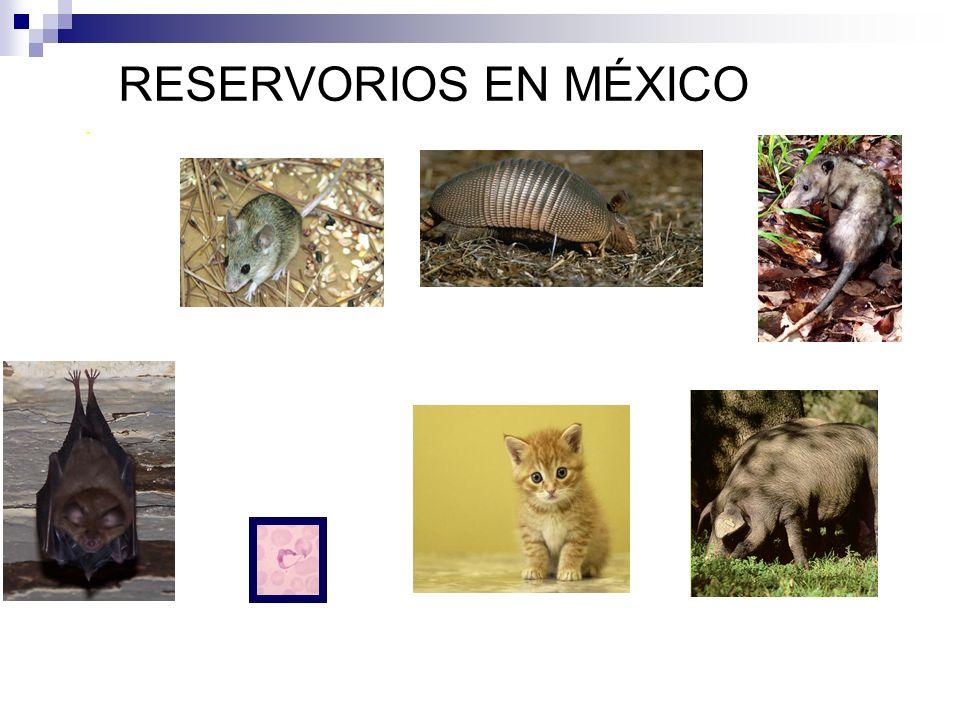 RESERVORIOS EN MÉXICO . entre otros.
