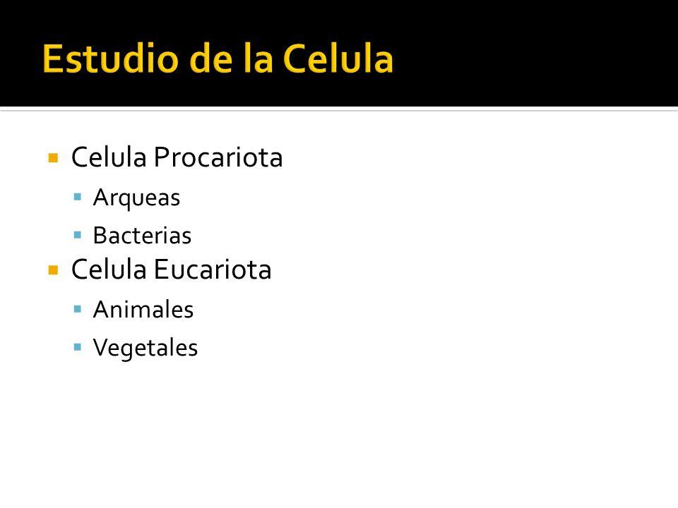 Estudio de la Celula Celula Procariota Celula Eucariota Arqueas