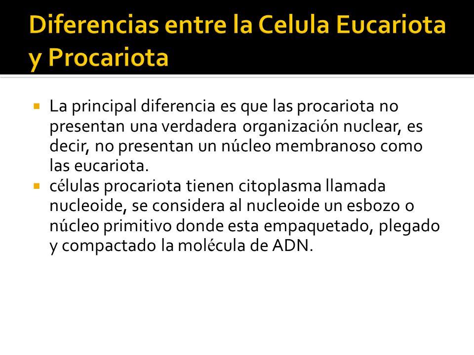 Diferencias entre la Celula Eucariota y Procariota