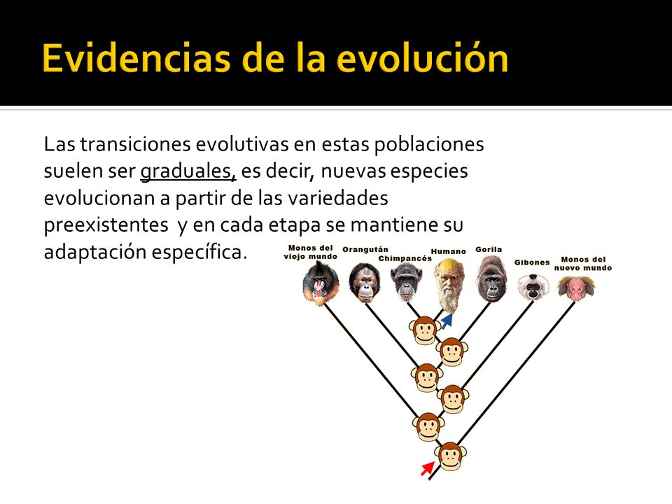 Evidencias de la evolución