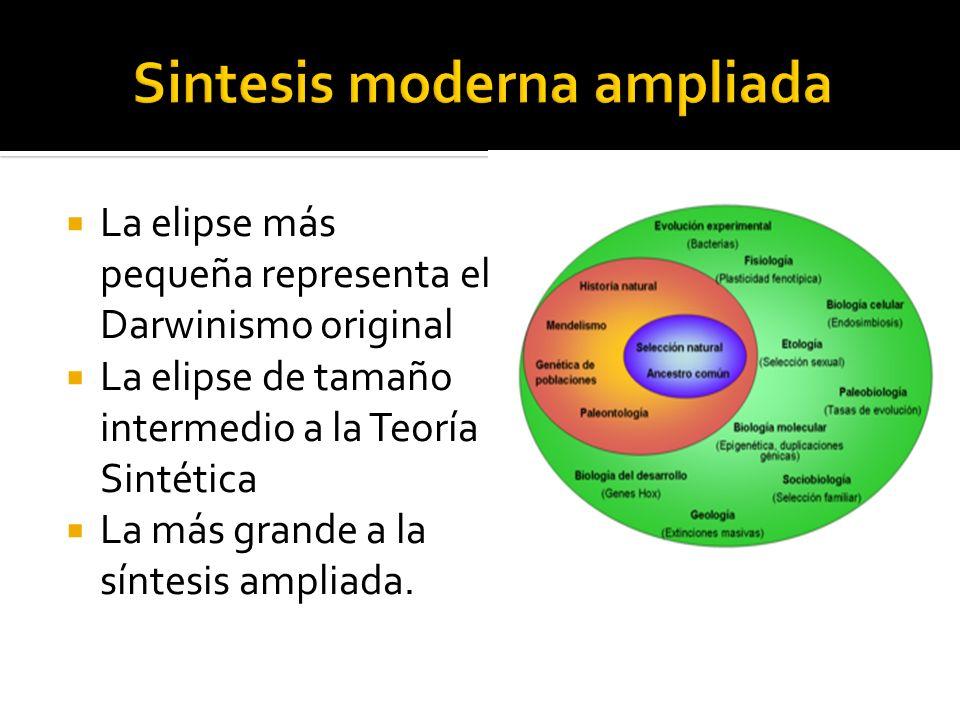 Sintesis moderna ampliada
