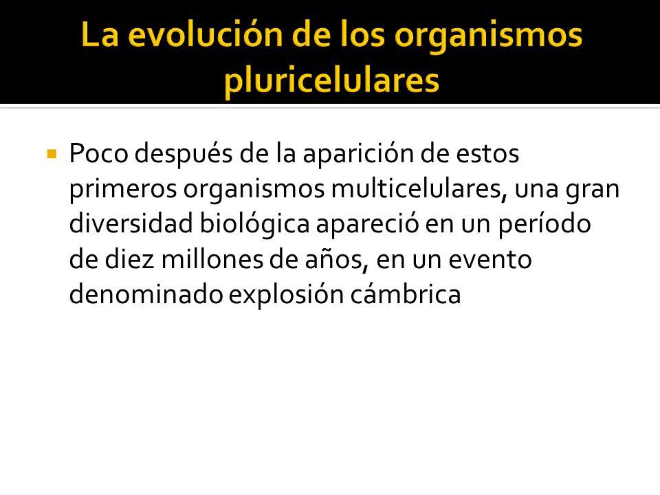 La evolución de los organismos pluricelulares