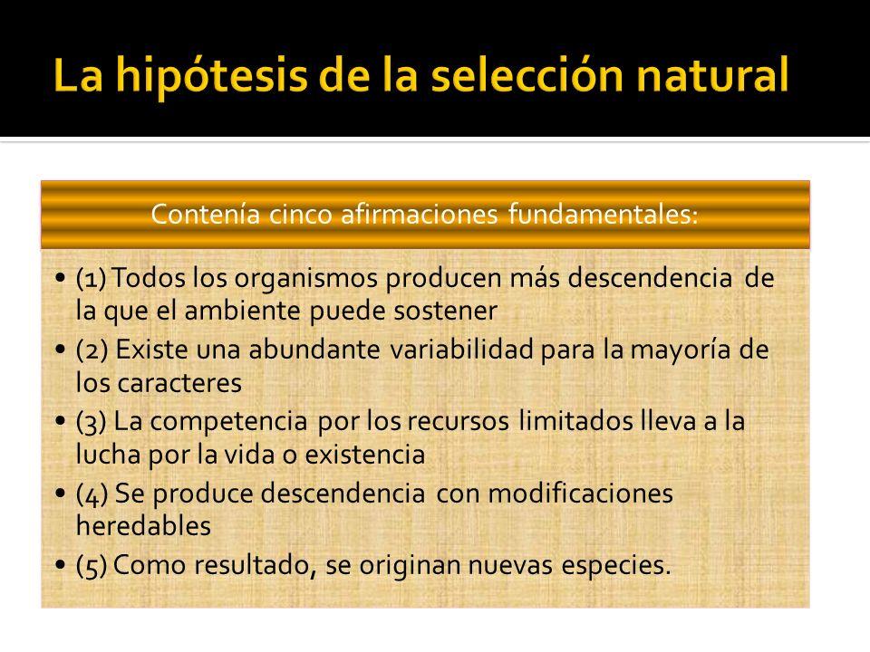 La hipótesis de la selección natural