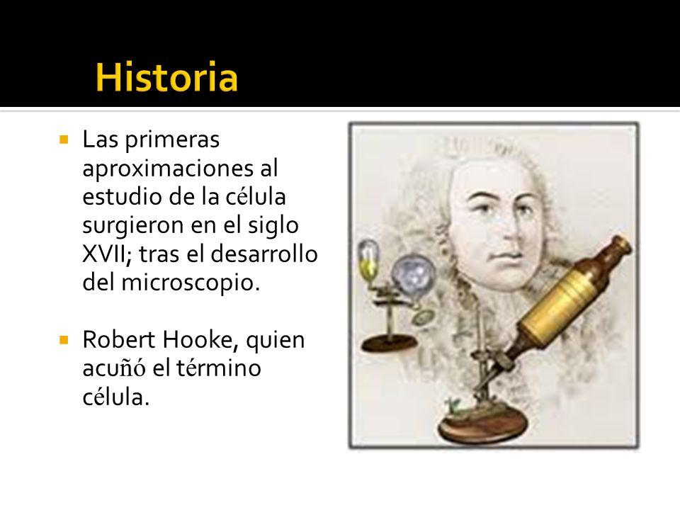 Historia Las primeras aproximaciones al estudio de la célula surgieron en el siglo XVII; tras el desarrollo del microscopio.