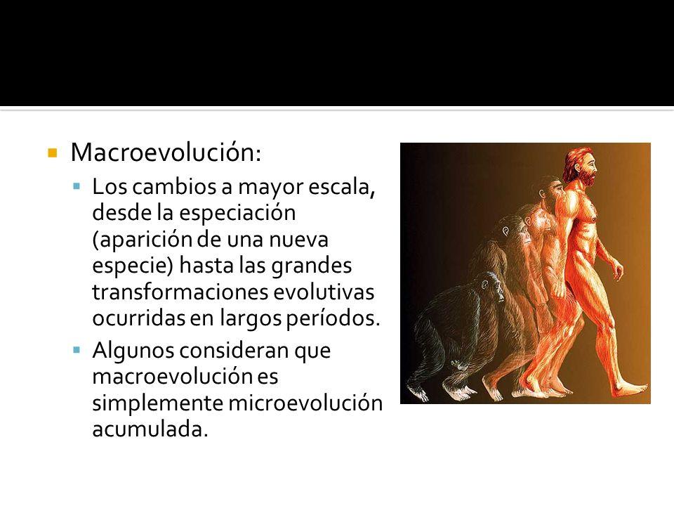 Macroevolución: