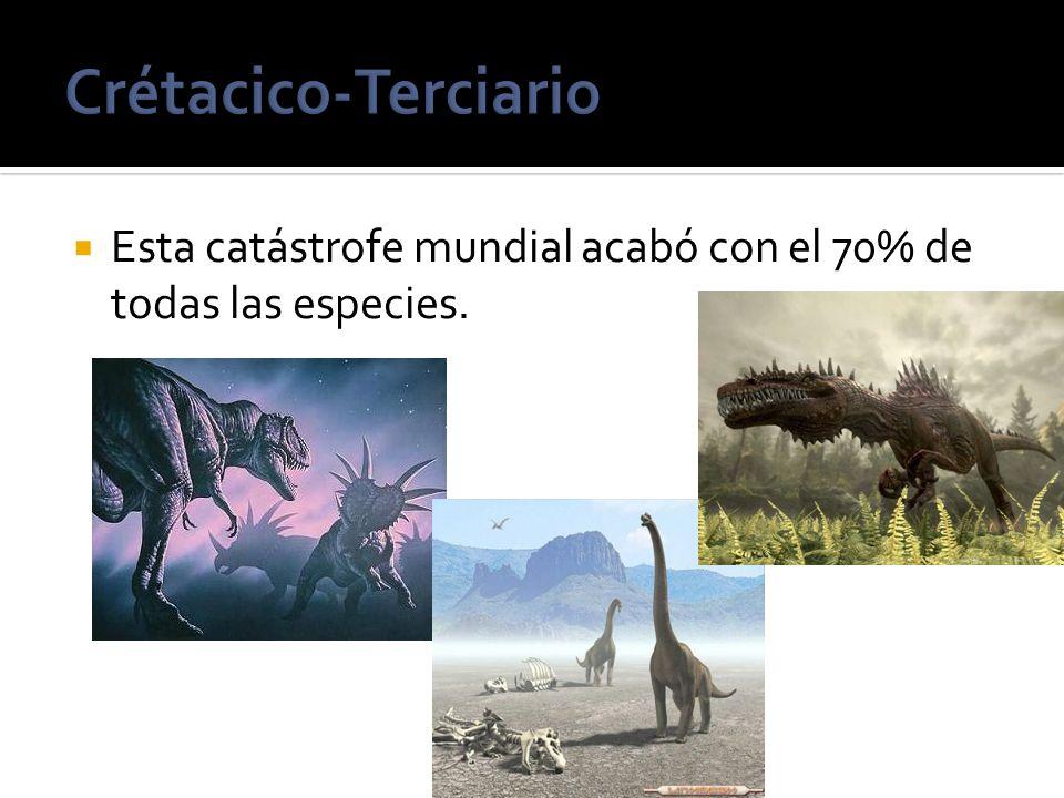 Crétacico-Terciario Esta catástrofe mundial acabó con el 70% de todas las especies.