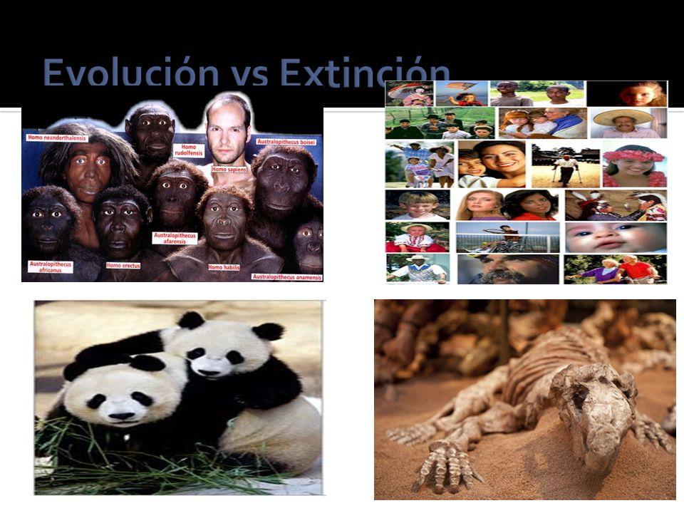 Evolución vs Extinción