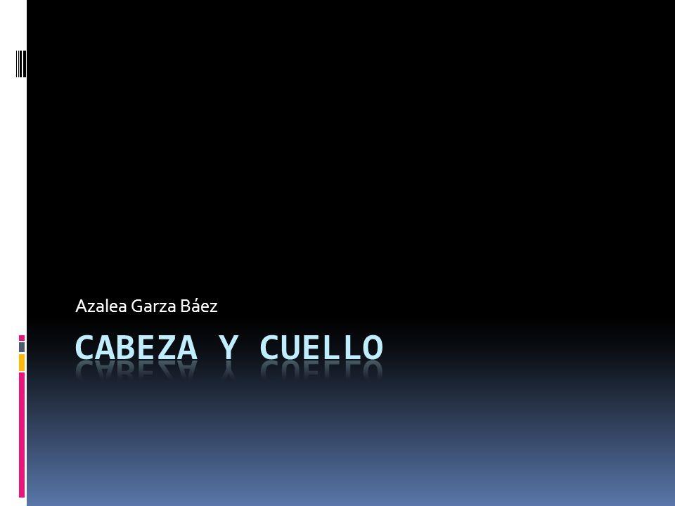 Azalea Garza Báez Cabeza y Cuello