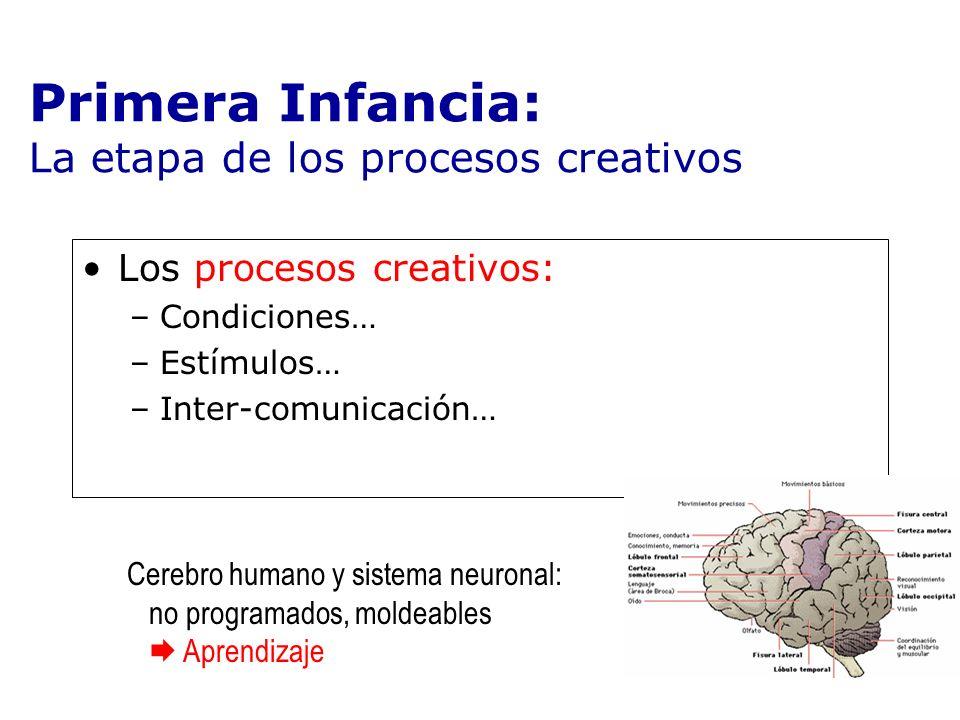 Primera Infancia: La etapa de los procesos creativos