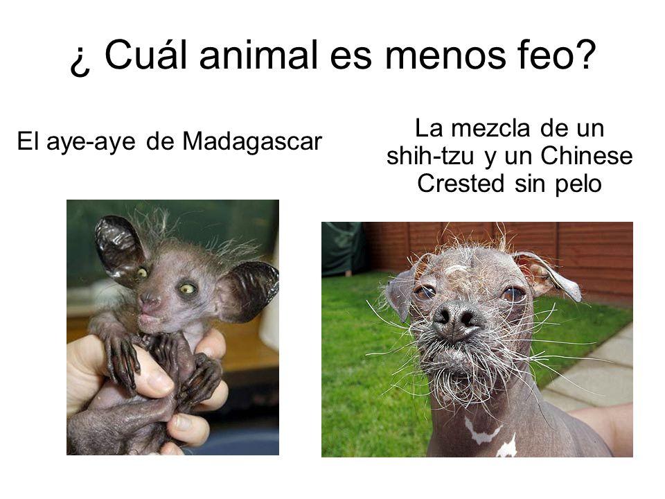 ¿ Cuál animal es menos feo