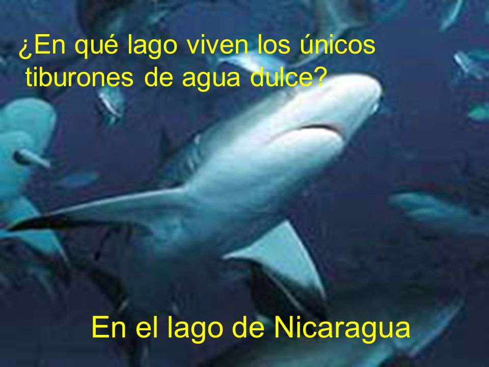 En el lago de Nicaragua ¿En qué lago viven los únicos