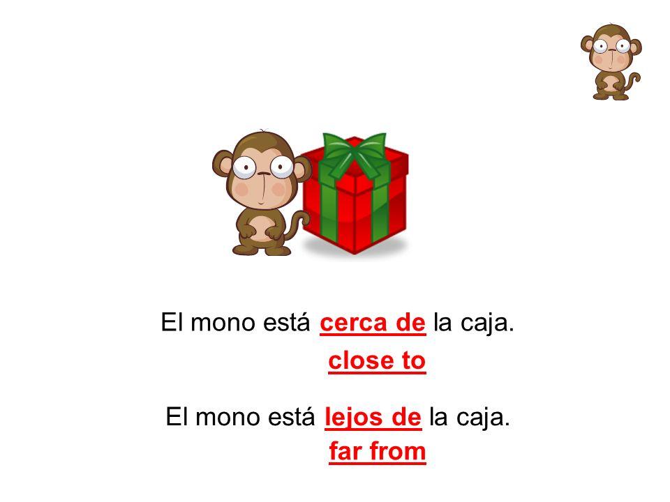 El mono está cerca de la caja. close to