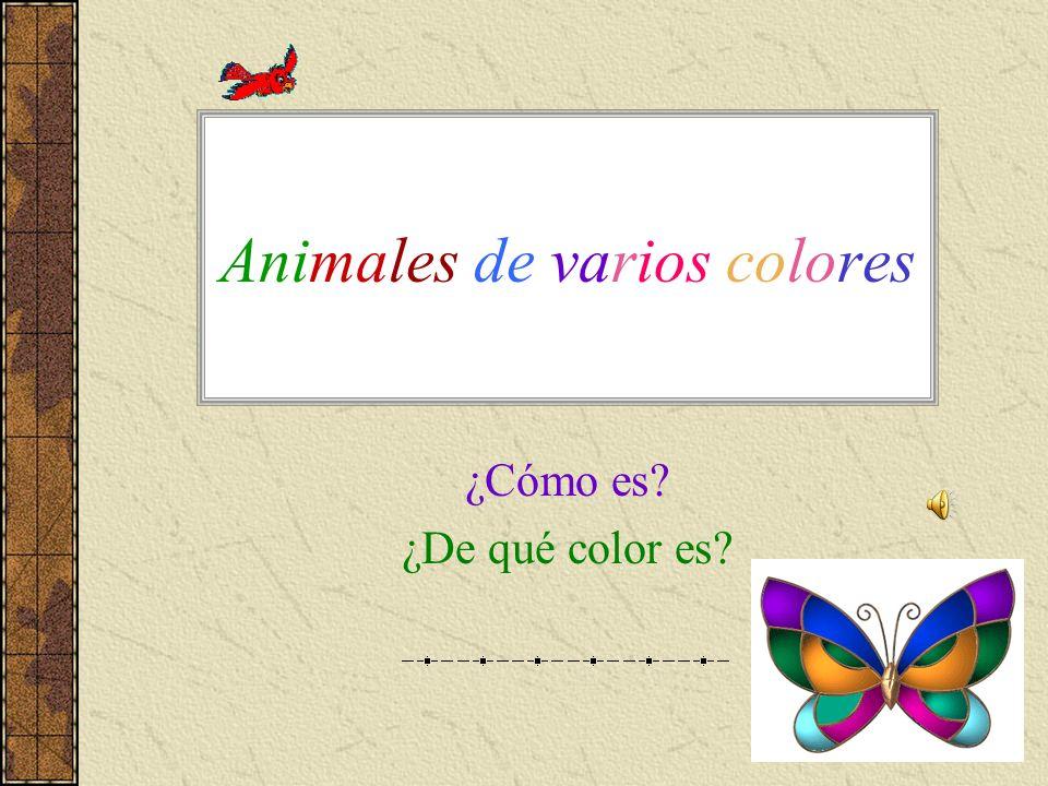 Animales de varios colores