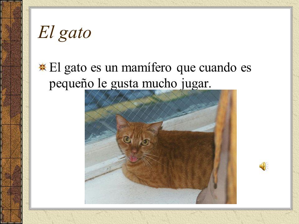 El gato El gato es un mamífero que cuando es pequeño le gusta mucho jugar.