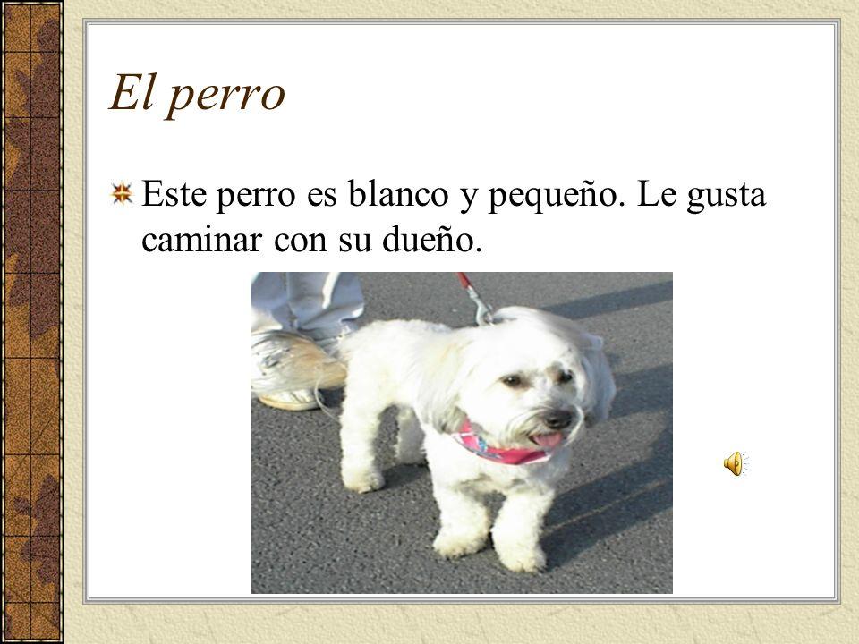 El perro Este perro es blanco y pequeño. Le gusta caminar con su dueño.