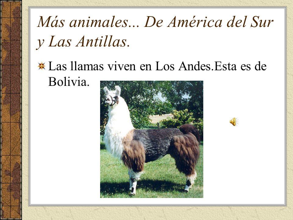 Más animales... De América del Sur y Las Antillas.
