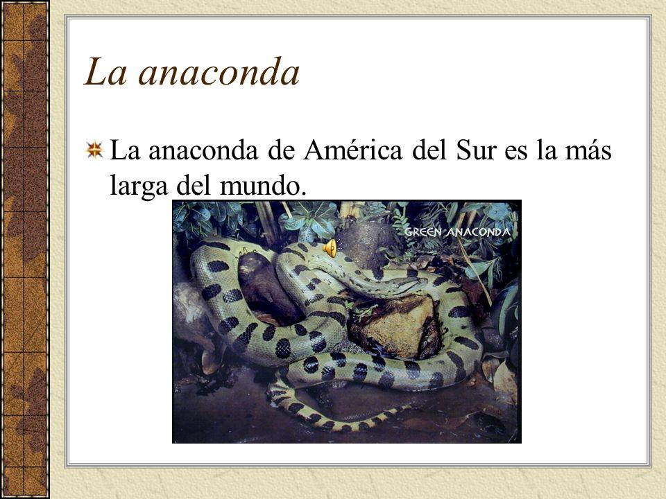 La anaconda La anaconda de América del Sur es la más larga del mundo.