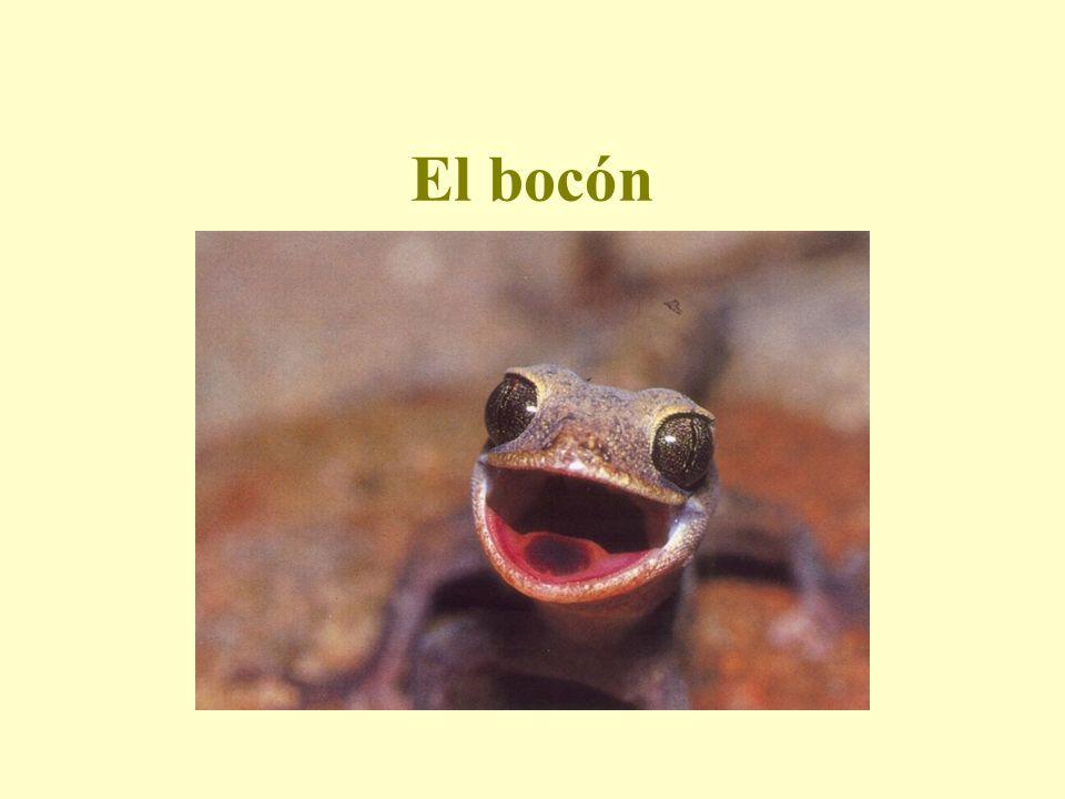 El bocón Qui cela peut-il bien être