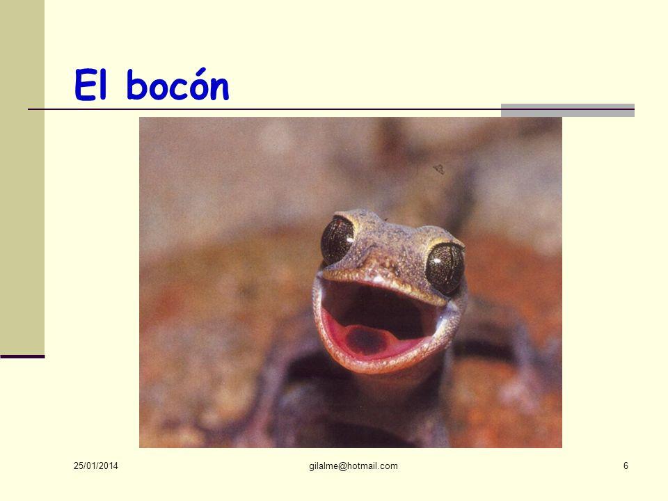 El bocón Qui cela peut-il bien être 24/03/2017 gilalme@hotmail.com
