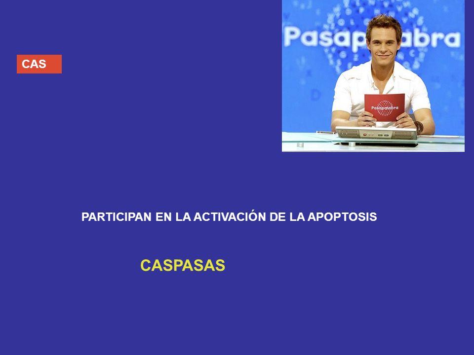 CAS PARTICIPAN EN LA ACTIVACIÓN DE LA APOPTOSIS CASPASAS