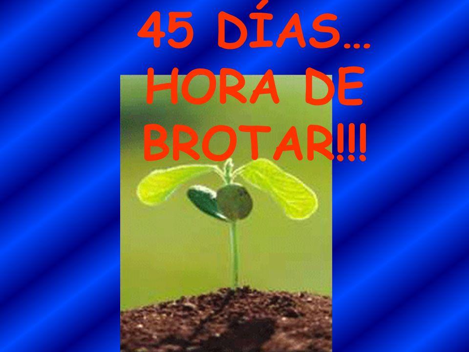45 DÍAS… HORA DE BROTAR!!!