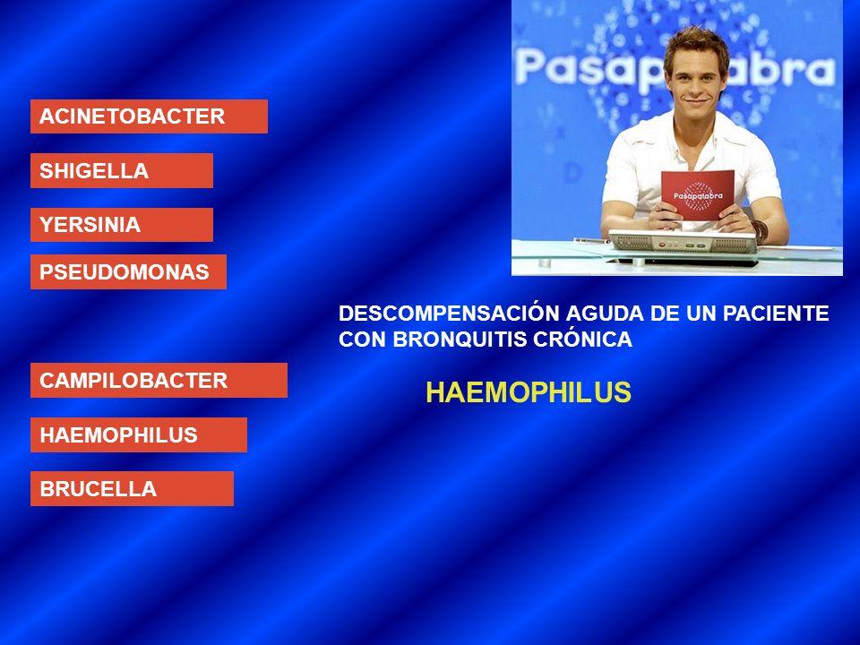 HAEMOPHILUS ACINETOBACTER SHIGELLA YERSINIA PSEUDOMONAS