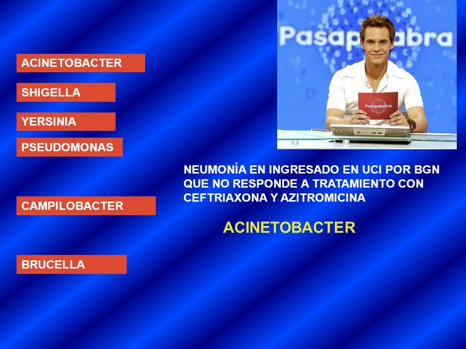 ACINETOBACTER ACINETOBACTER SHIGELLA YERSINIA PSEUDOMONAS