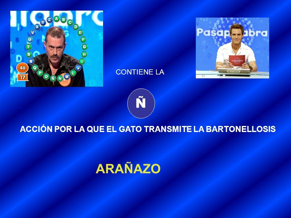 Ñ ARAÑAZO ACCIÓN POR LA QUE EL GATO TRANSMITE LA BARTONELLOSIS