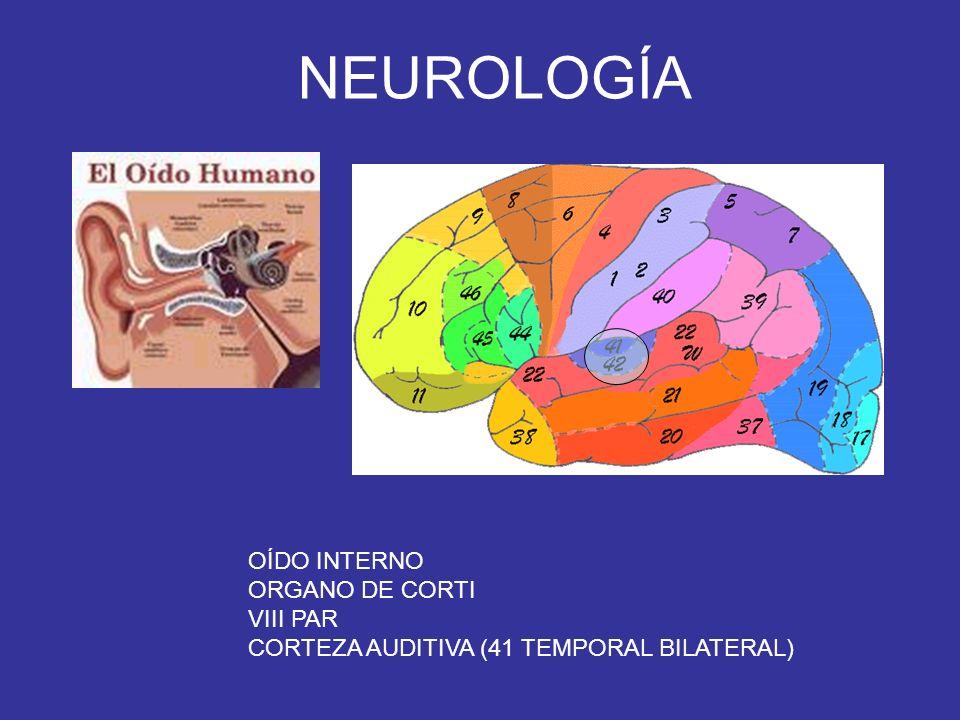 NEUROLOGÍA OÍDO INTERNO ORGANO DE CORTI VIII PAR