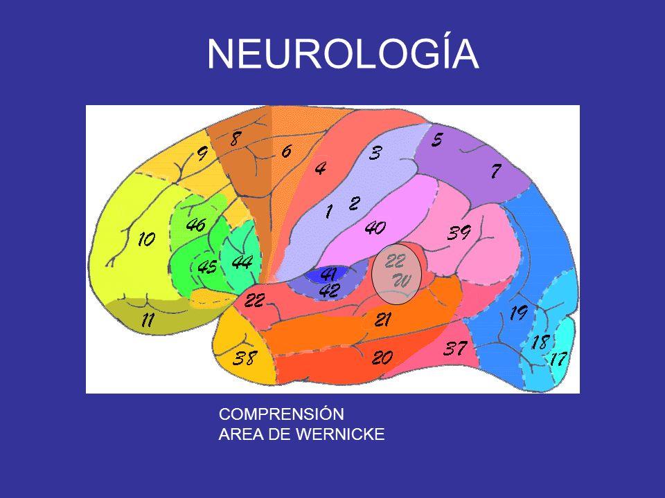 NEUROLOGÍA COMPRENSIÓN AREA DE WERNICKE