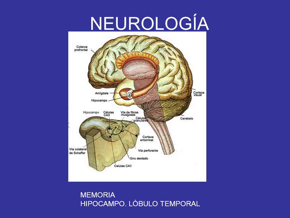 NEUROLOGÍA MEMORIA HIPOCAMPO. LÓBULO TEMPORAL