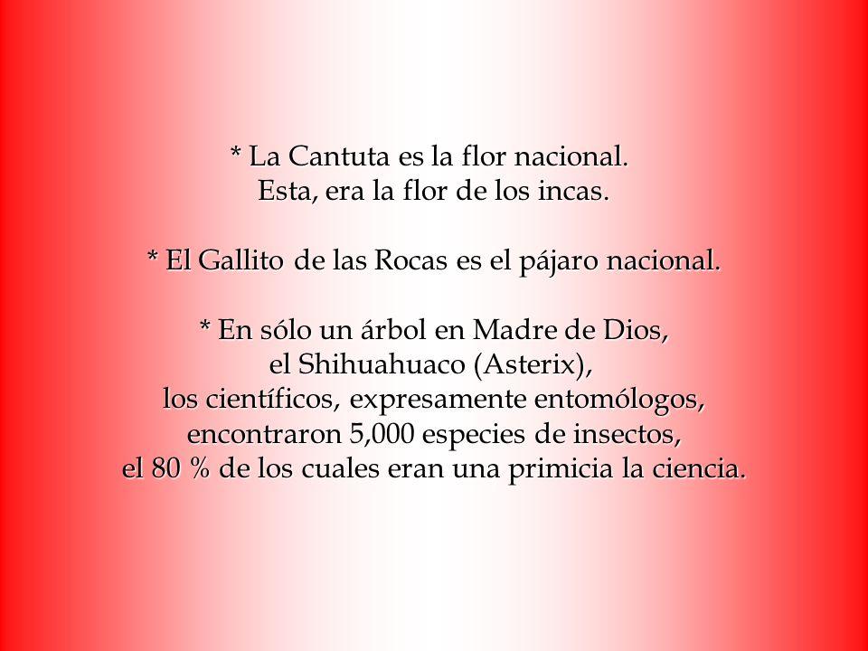 La Cantuta es la flor nacional. Esta, era la flor de los incas
