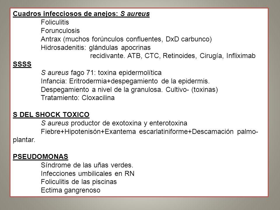 Cuadros infecciosos de anejos: S aureus