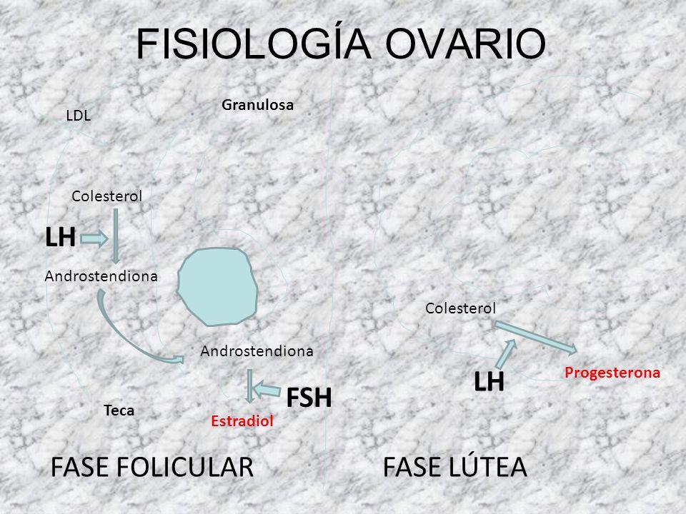 FISIOLOGÍA OVARIO LH LH FSH FASE FOLICULAR FASE LÚTEA Granulosa LDL