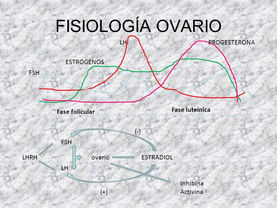 FISIOLOGÍA OVARIO LH PROGESTERONA ESTRÓGENOS FSH Fase luteínica
