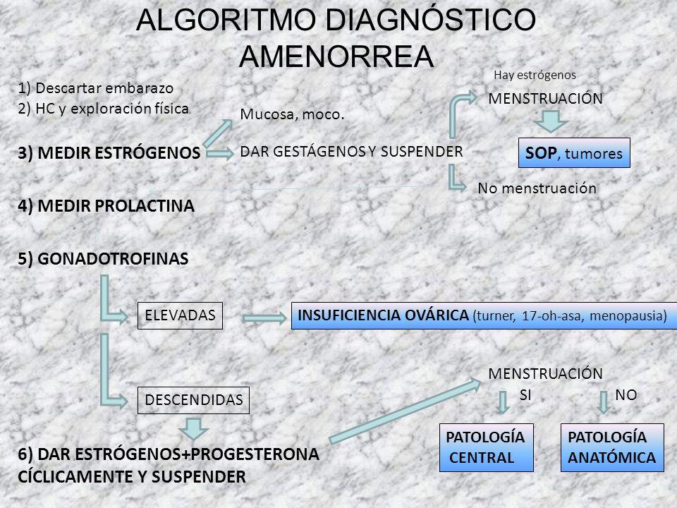 ALGORITMO DIAGNÓSTICO AMENORREA