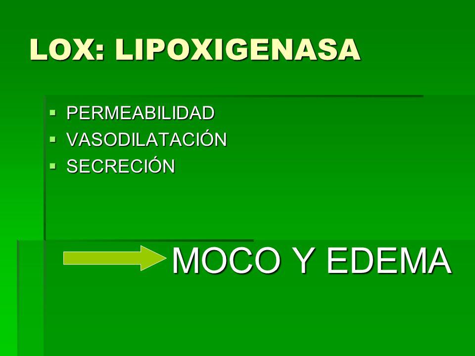 LOX: LIPOXIGENASA PERMEABILIDAD VASODILATACIÓN SECRECIÓN MOCO Y EDEMA