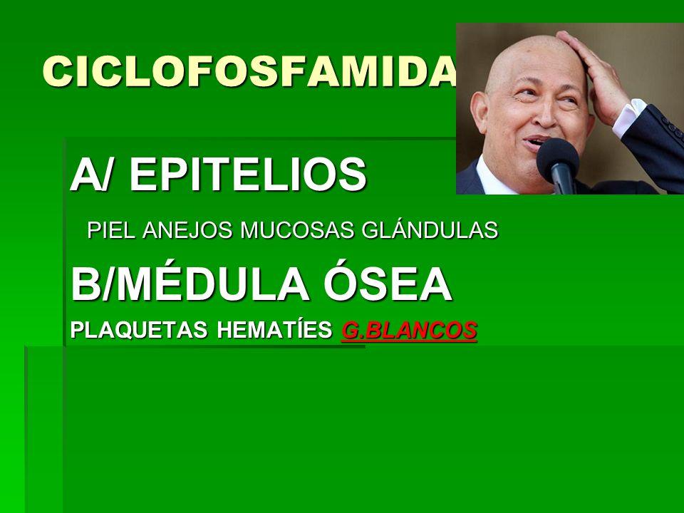 A/ EPITELIOS B/MÉDULA ÓSEA CICLOFOSFAMIDA