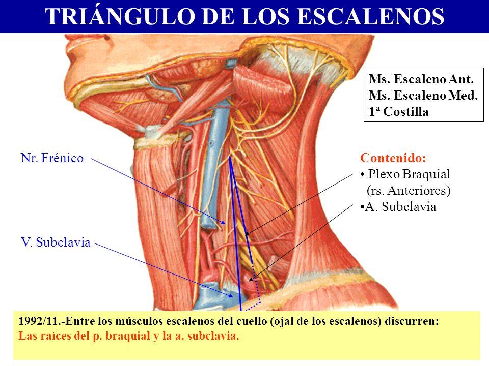 TRIÁNGULO DE LOS ESCALENOS