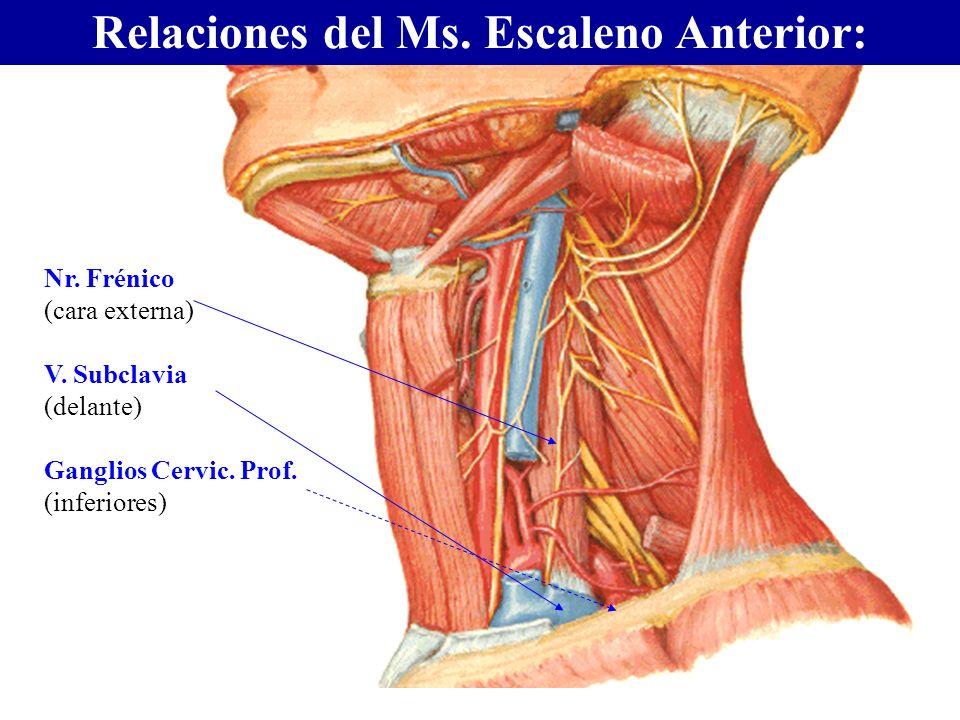 Relaciones del Ms. Escaleno Anterior: